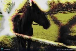 interpretation horse 8 #Creative #Art #DigitalArt @touchtalent.com