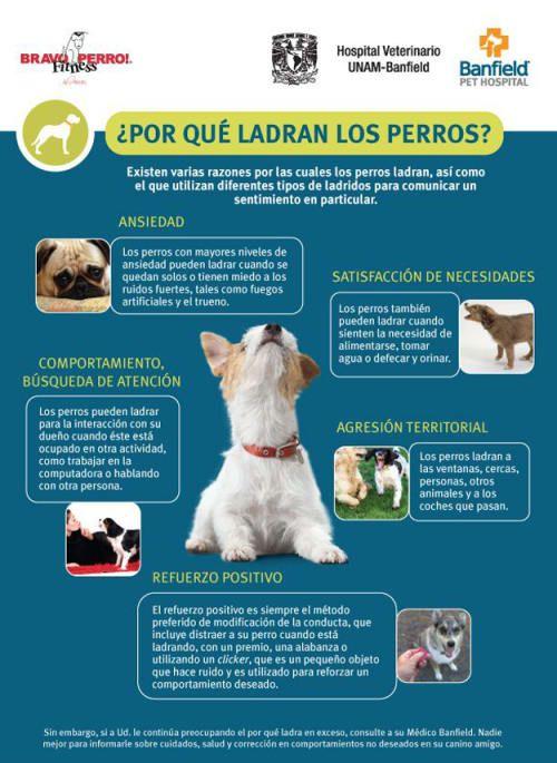 Tipos De Collares De Castigo Para Perros Mientras Estas Educando A Tu Perrito Es Importantisimo Que No