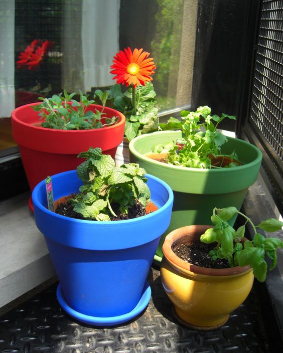 Bright flower pots with bright flowers