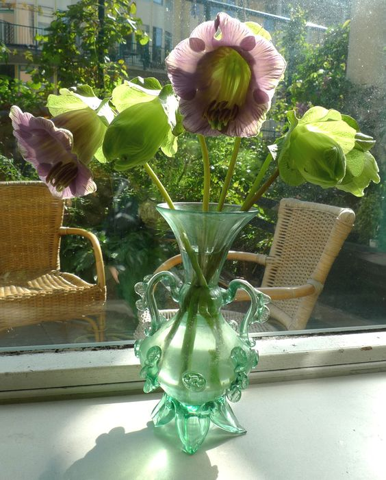 Vaasje Cobaea bloemen