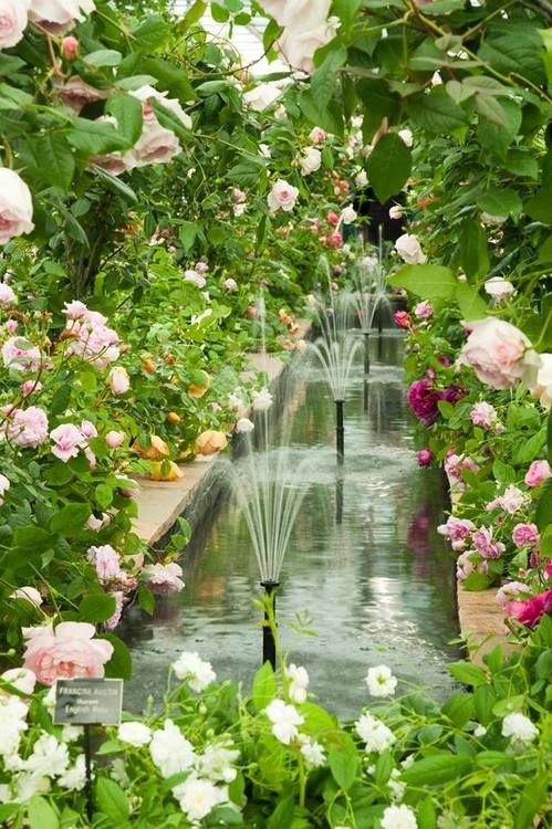 Roses garden english roses and chelsea flower on pinterest for Flower garden ponds