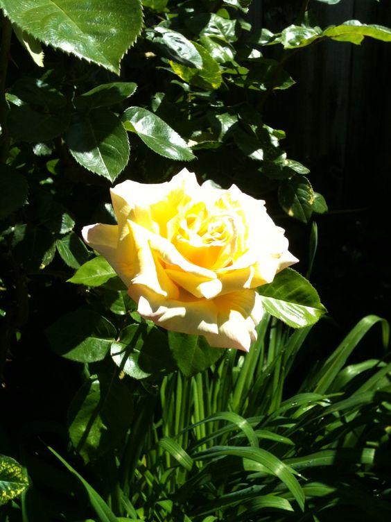 Peace 04/2012