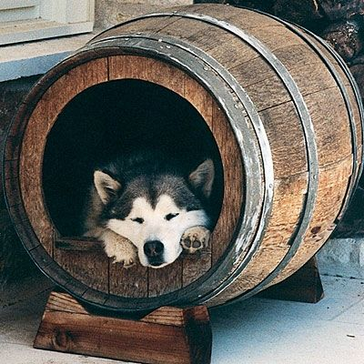Upcycled wine barrel dog house.