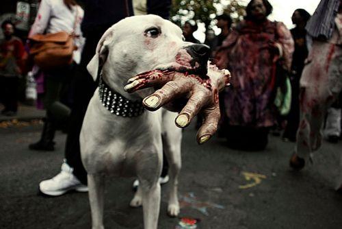 Good doggie..