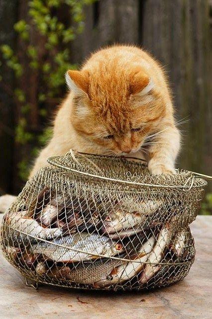 魚を見つめる野良猫)