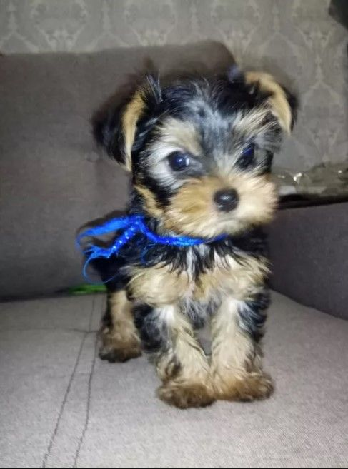 415 Female Dog Names That Start With L Cute Cats And Dogs Dog