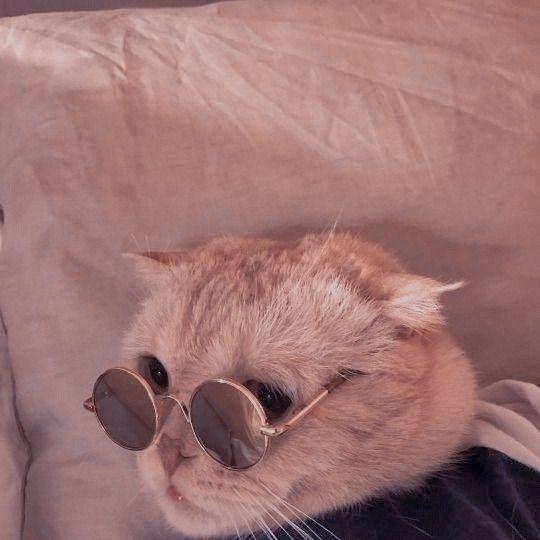 Aesthetic Cat Kucing Bayi Binatang Kucing Cantik