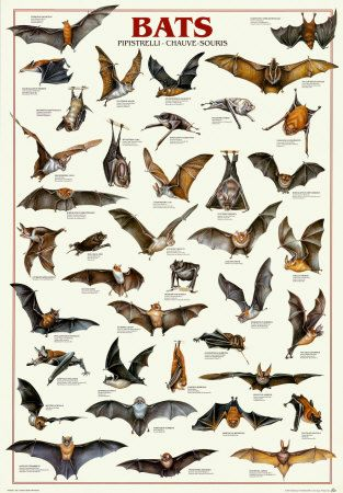 BATS, Why They Are Important, And How To Get Bats To Make A Home In Your Yard.