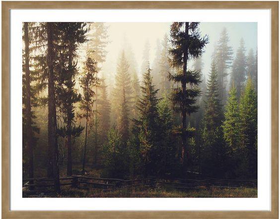 New Era Publishing Kevin Russ, Sunrise Forest