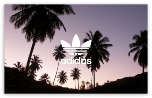 Image Result For Adidas Palm Tree Background Palm Tree Background Palm Background Background Hd Wallpaper