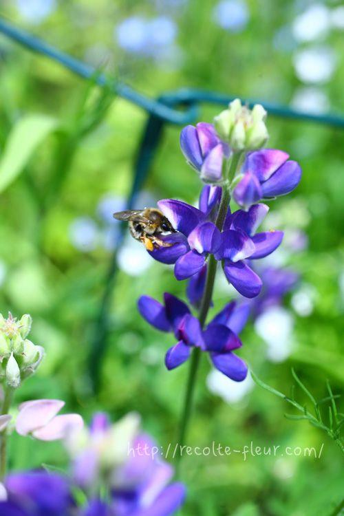 育てた花を生けよう 春から初夏 3月 4月 5月 に花が咲く 切り花でも楽しめる草花12種をご紹介 Lovegreen ラブグリーン 青い花 切り花 庭 づくり