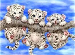 Bildergebnis für tigerbabys süß