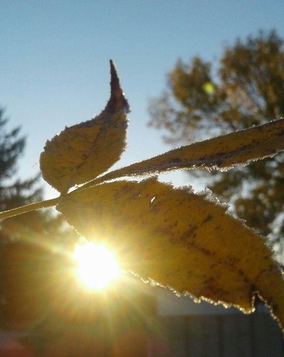 """""""Autumn Frost"""""""