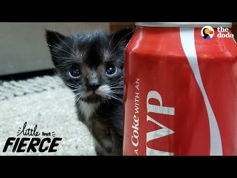 Littlest Kitten Ever Grows Up To Be A Mini Cat Newborn Kittens