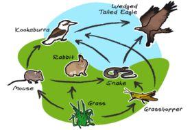 نتيجة بحث الصور عن bio community snake mouse rabbit