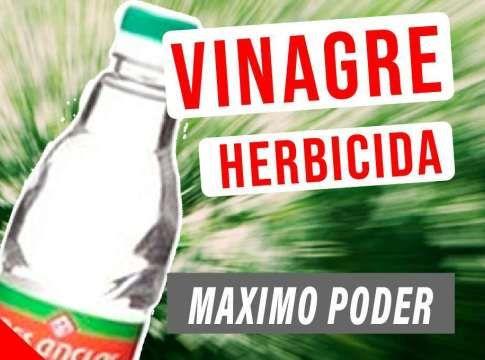 7 Recetas De Fertilizantes Caseros Para Tus Plantas Cosas Del Jardin Herbicida Vinagre Para Las Plantas Fungicidas Caseros