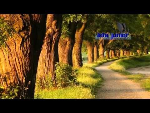 Amor Dividido Leandro E Leonardo Youtube árvore De Papel De Parede Claude Monet Gustav Klimt