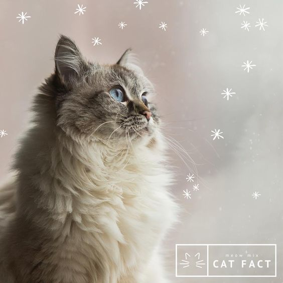 While most cats dislike the cold, some breeds like the Norweigan Forest Cat, Maine Coon and Siberine may actually enjoy the cold weather.