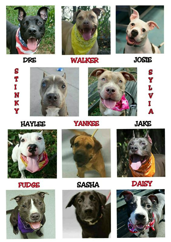 FRIDAY 9-16-16 KILL LIST IS OUT THE KILLING NEVER STOPS @NYCACC PLEASE SHARE EVERYBODYALL AVAILABLE FOR NOW @NYCDOGS.URGENTPODR.ORG