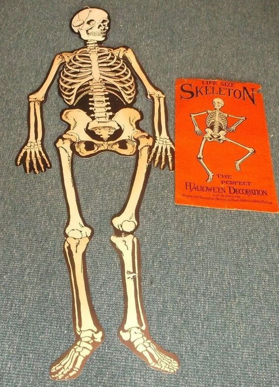 halloween skeleton life size