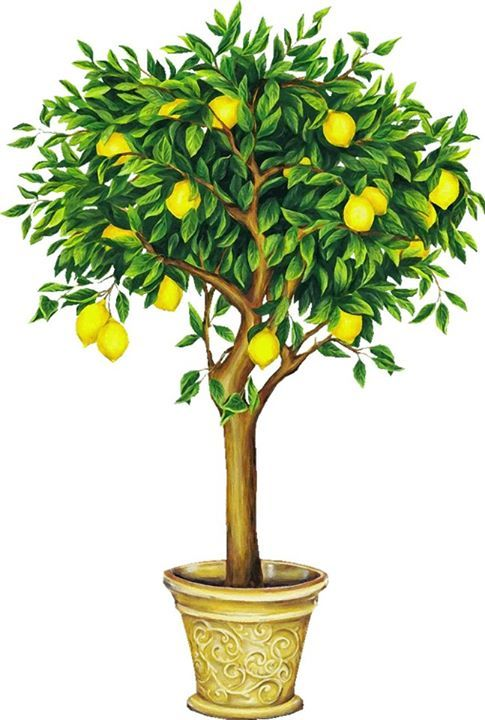 Trees, Galleries and Lemon on Pinterest