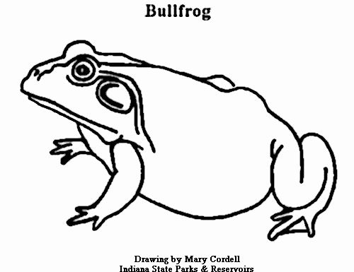 Coloring Book Images Of Animals Best Of Dnr Coloring Pages Animals