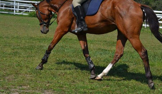Tips for training ottb to use back muscles and lengthen neck