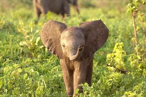 adorable baby elephant (1)