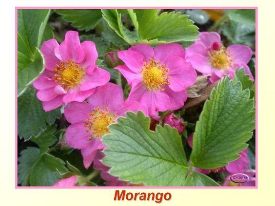Você conhece a flor de cada fruta?
