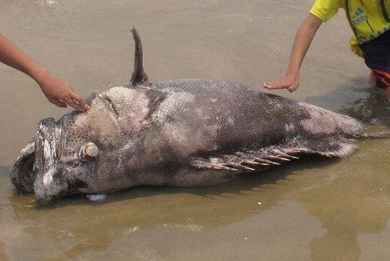Nghiêm cấm sử dụng hải sản chết bất thường làm thực phẩm - http://www.daikynguyenvn.com/viet-nam/nghiem-cam-su-dung-hai-san-chet-bat-thuong-lam-thuc-pham.html