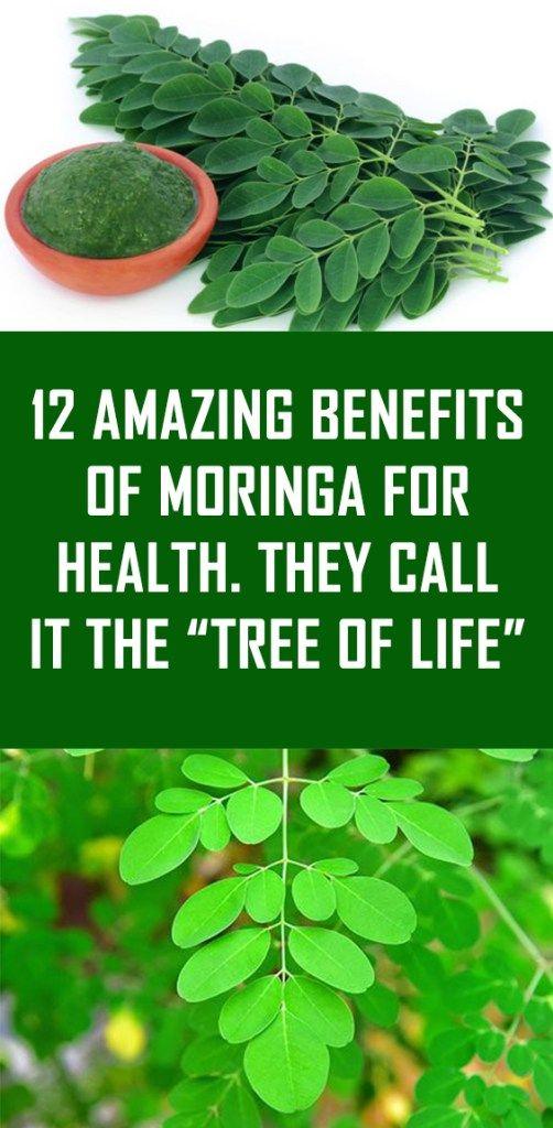 12 Amazing Benefits Of Moringa For Health Moringa Herbs For Fertility Health