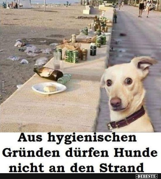 Aus Hygienischen Grunden Durfen Hunde Nicht An Den Strand Lustige Bilder Spruche Witze Echt Lustig Lustige Hund Bilder Hund Witze Witzige Hundebilder