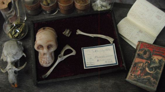 Miniature Human Bone Museum Display. $10.00, via Etsy.