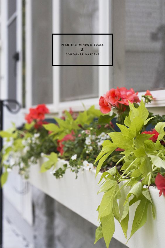 How to Plant Window Box & Container Gardens. Thriller, spiller, filler. Great list of shade and full sun plants.