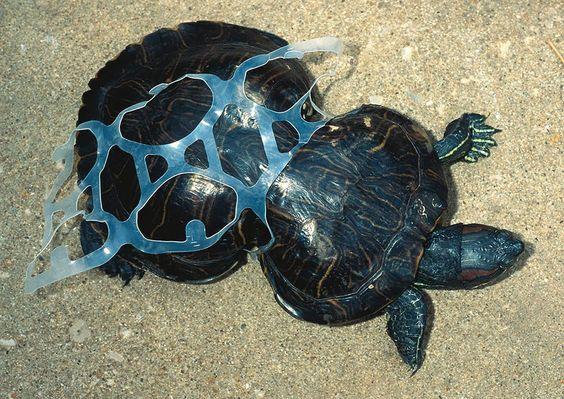 http://www.demotivateur.fr/article-buzz/22-photos-terrifiantes-qui-montrent-que-nos-conditions-de-vie-sont-ravagees-par-la-pollution-poignant--2319