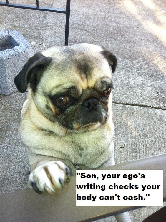 Son Your Ego S Writing Checks Your Body Can T Cash Lol Pugs Cute Pugs Pugs Pug Quotes