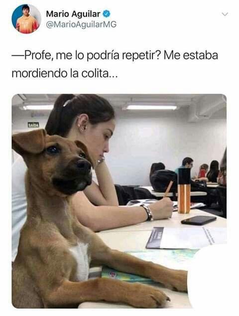Humor Chistes Chiste Risas Memes Risasinmas Memes Perros Perros Graciosos Memes De Animales