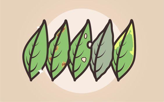 O estado das folhas é um dos melhores indicativos da saúde de uma planta. Sua observação ajuda a identificar desde deficiência de nutrientes até água em excesso