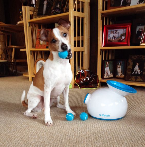 Automatic iFetch Pet Toy