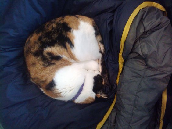 Calico's Strategic Thinking Tip #4 - Get plenty of sleep.  It helps you think clearly.