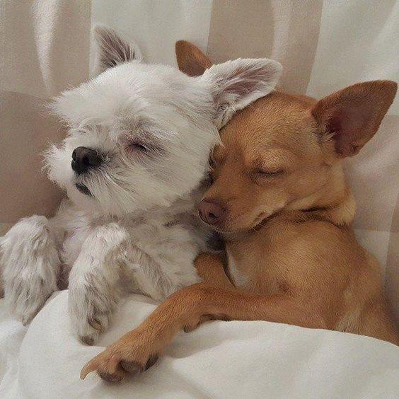 ¿Es mejor tener dos perros?