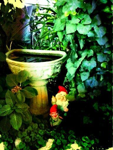 Gardens gnomos