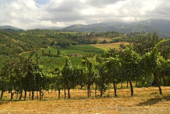 The Wines of Umbria