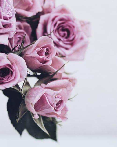 باقة ورد جميلة باقات ورد صباحية جميلة جدا باقة ورد كبيرة Zina Blog Rose Beautiful Roses Rose And Rosie
