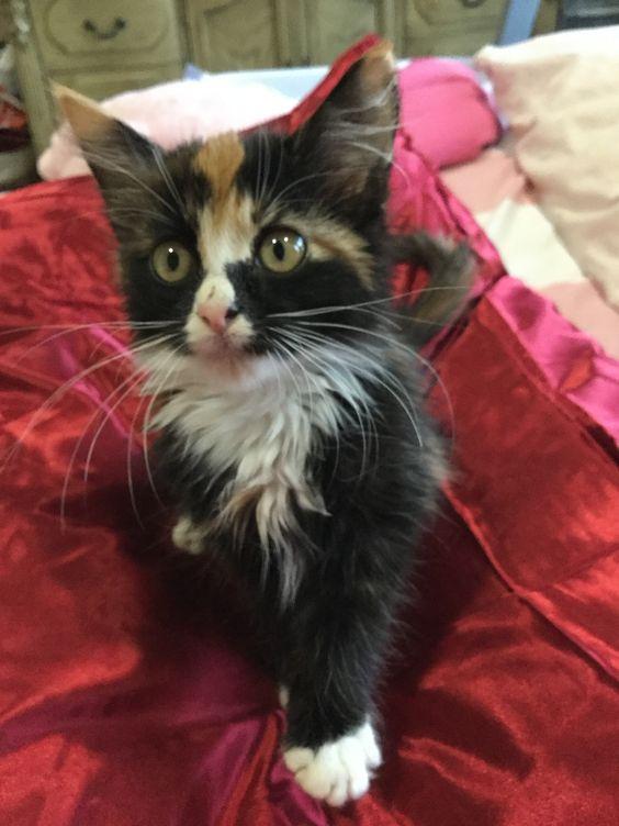 Baby kitty Molly's best friend