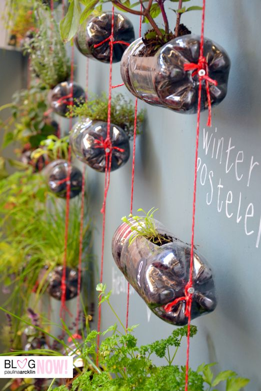 Turn empty pop bottles into mini-planters. You can fill them with herbs! #gardening #healthykids
