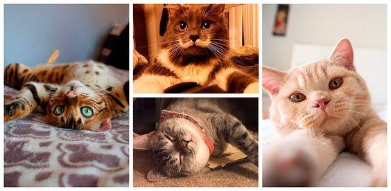 Vamos falar sobre felinos fabulosos? Ou melhor, vamos vê-los! Aqui estão os gatos mais fofos e famosos do Instagram. Seu feed nunca mais será monótono com esses bichanos...