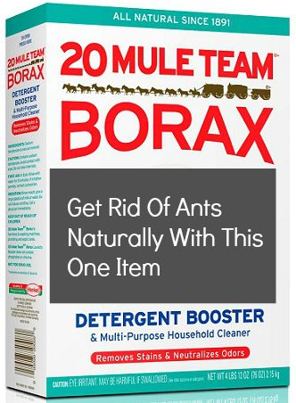 how to get rid of ants naturally one to one borax sugar then put on plate with syrup or. Black Bedroom Furniture Sets. Home Design Ideas