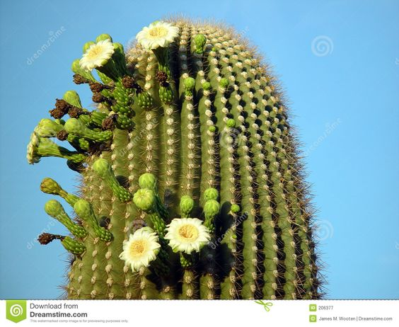 Summer Cactus Royalty Free Stock Photography - Image: 206377