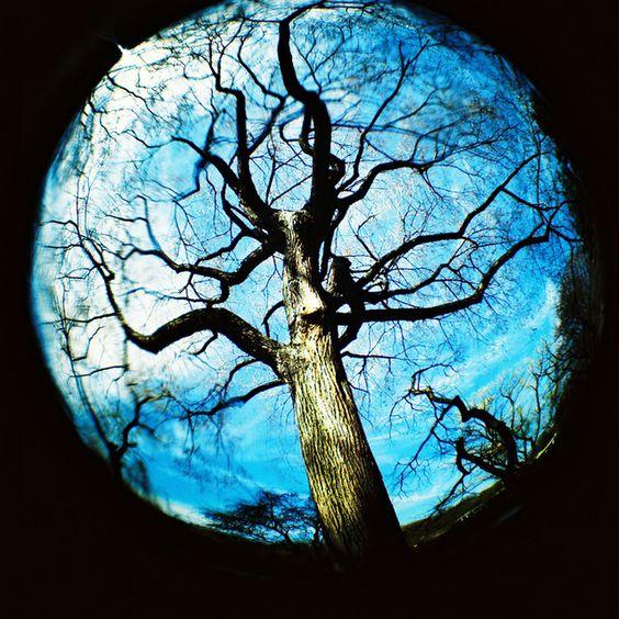 lomography...: Amazing Photography, Art Photography, Fisheye Referencias, Fisheye Lens, Lomography Trees, Fish Eye, Photography Inspiration, Fisheye Inspiration, Street Photography